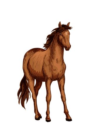 茶色のロバ アラビア品種スケッチの馬  イラスト・ベクター素材