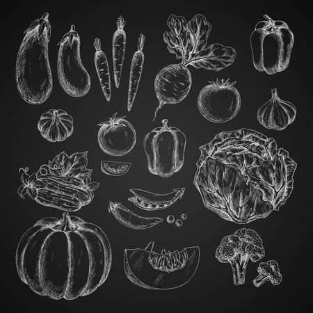 野菜分離アイコン ベクトル スケッチ