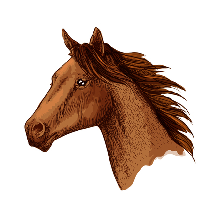 Horse trotter head vector sketch symbol Çizim
