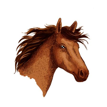 Arabian brown wild horse head vector sketch symbol
