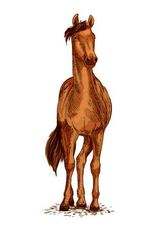 Paard of wilde renpaardhengst. Arabisch bruin mustang draver of racer vector schets symbool voor paarden sport races of ritten en paardensport racewedstrijd of tentoonstelling