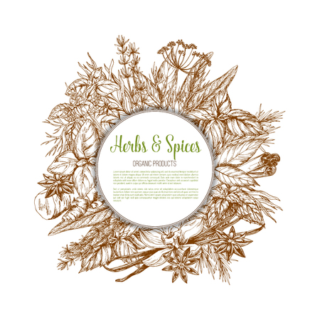 Herbs and spices sketch vector poster