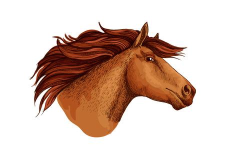 Horse racer mustang head vector sketch symbol