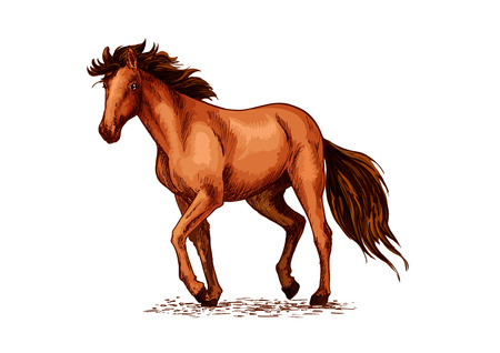 Horse sketch of brown mustang stallion Illustration