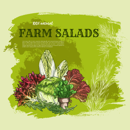 Salad leaf and green vegetable sketch poster Illustration