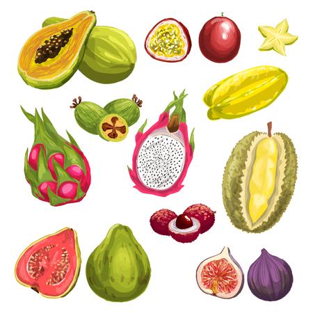 exotic fruit: Exotic tropical fresh fruit watercolor set design