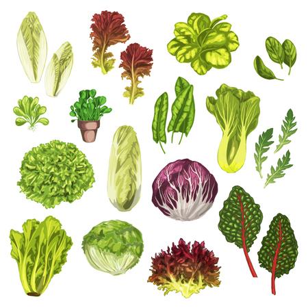 緑の野菜、サラダ葉、ハーブ水彩セット