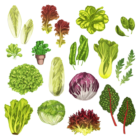 Vegetable greens, salad leaf, herbs watercolor set Çizim