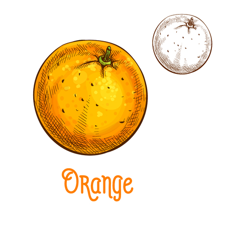 dietary: Orange fruit vector sketch isolated icon Illustration