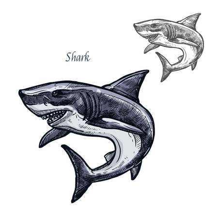 Shark fish vector isolated sketch icon