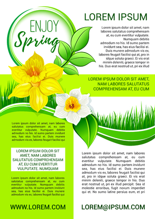 Springtime vector poster daffodil blooming flowers