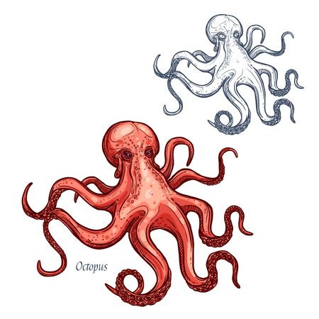 Octopus vector isolated sketch icon Illustration