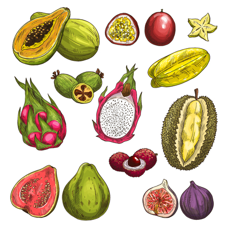 Vector sketch icons of exotic tropical fruits Ilustração
