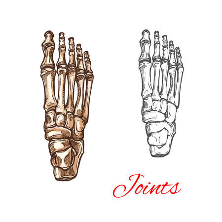 Vector sketch icon of human foot bones or joints Illustration