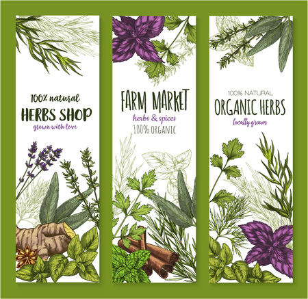 Herb and spice natural organic food ingredient sketch banner set. Fresh mint, basil, rosemary, cinnamon, parsley, ginger, thyme, anise star, dill, cardamom and sage green leaf for spice shop design