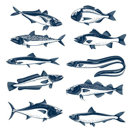 Fish, sea animal and seafood icon set. Salmon, tuna, mackerel, trout, bass, perch, dorado, eel, cod, sardine, herring, sprat isolated blue silhouette for fish market, seafood and fishing theme design Illustration