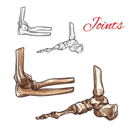 Foot, ankle, elbow bone and joint sketch. Medical anatomy of human skeleton arm and leg bones with elbow and foot joints for hospital poster, healthcare, rheumatology and orthopedics themes design