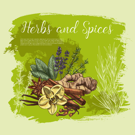 Herb and spice poster of fresh thyme, rosemary, anise star, cinnamon stick, ginger root, vanilla flower and pod, clove, sage leaf and lavender sketch. Organic farming, spice shop, healthy food design Illustration