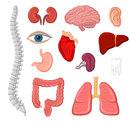 Human organ cartoon icon set. Heart, lung, liver, ear, stomach, kidney, brain, eye, tooth, bladder, ear, spine and intestine isolated sign. Internal and external organs for anatomy and medicine design Stock fotó - 79001566