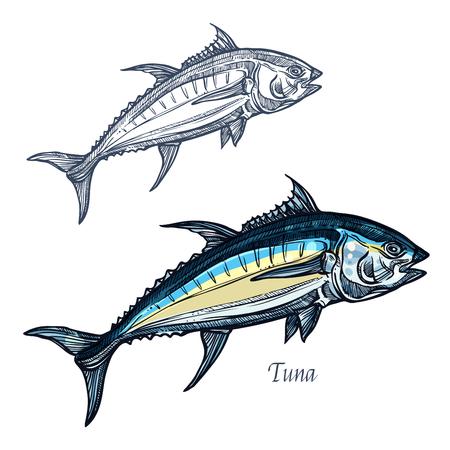 참치 스케치 벡터 물고기 아이콘입니다. 고립 된 바다 고등어 물고기 종입니다. 해산물에 대 한 격리 된 기호 레스토랑 기호 또는 휘장, 낚시 클럽 또는
