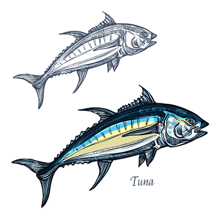 Tuna sketch vector fish icon. Isolated ocean mackerel fish species. Isolated symbol for seafood restaurant sign or emblem, fishing club or fishery market
