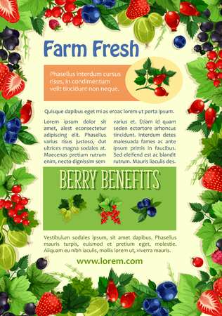 Berries vector poster for farm market or berry store. Farm fresh raspberry and black or red currant, strawberry and cherry or gooseberry, garden blueberry and blackberry or bilberry and juicy cherry fruit