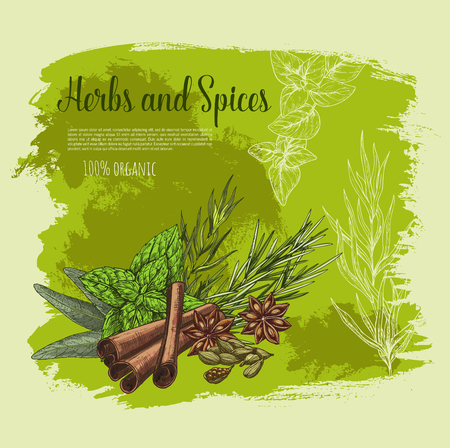 Spices and herbs or herbal seasonings vector poster. Cooking condiments cinnamon and sage or bay leaf, peppermint or rosemary culinary flavoring and anise star or cardamom seeds Illustration
