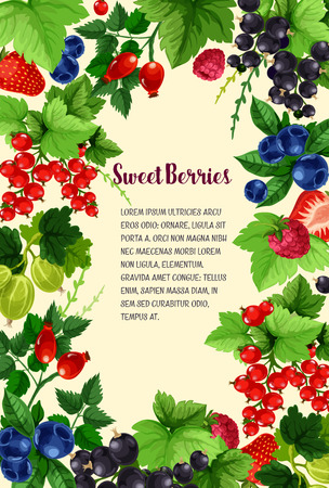 Berries vector poster of strawberry, blueberry and cranberry, fresh harvest of black currant or redcurrant and sweet garden raspberry, juicy wild briar berry and gooseberry for berry shop or farmer market