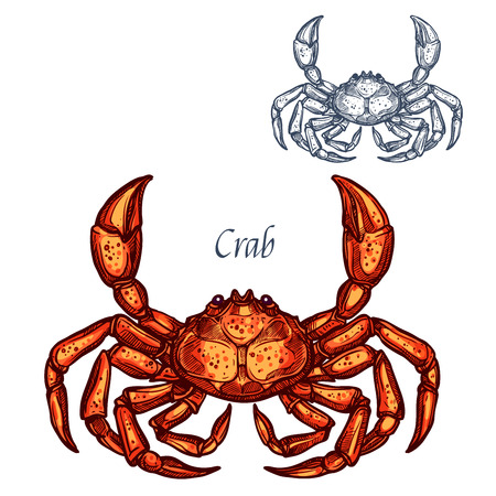 Crab lobster seafood vector isolated sketch icon