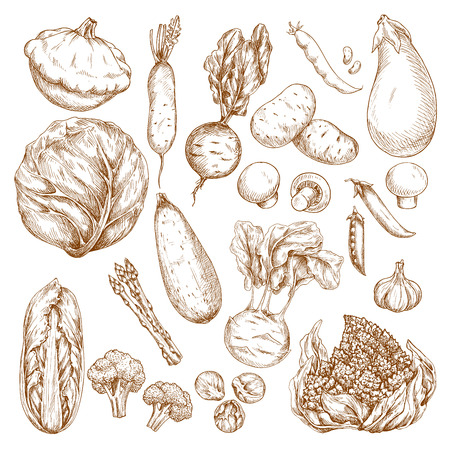 Sketch isolated vegetables vector icons set