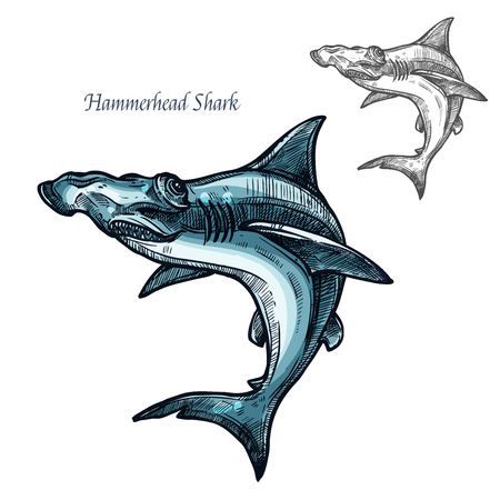 Hammerhead shark sketch vector fish icon. Isolated ocean predatory winghead shark fish species. Isolated fauna and zoology symbol or emblem for fishing club or fishery market