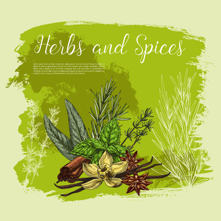 Herbs and spices vector poster. Culinary herbal seasonings of vanilla and cinnamon, cooking condiments peppermint and sage or bay leaf, peppermint and anise star seeds flavoring and rosemary dressing Zdjęcie Seryjne - 79001859
