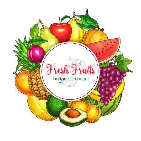Fresh fruits poster of summer fresh exotic pineapple and pomegranate, apricot or pear and tropical banana. Vector harvest of juicy watermelon or melon, peach, grapes and plums or avocado and lemon Illustration