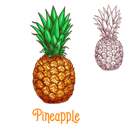 Pineapple ananas fruit vector sketch isolated icon Illustration