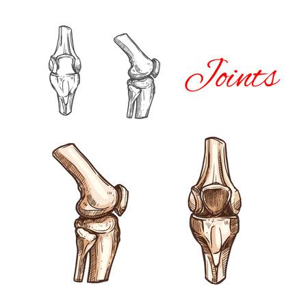 人間膝や肘関節のベクター スケッチ アイコン  イラスト・ベクター素材