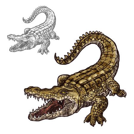 Krokodil alligator schets vector pictogram. Zee of rivier roofzuchtige reptielen diersoorten. Geïsoleerde fauna en dierkunde symbool of embleem voor de visserij club of visserij zeevruchten markt