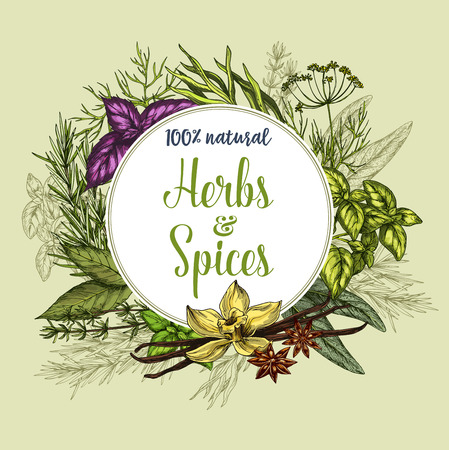 Herbs and spices poster. Natural fresh organic seasonings of thyme, basil or oregano and ginger or spicy chili pepper.