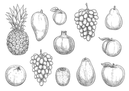 Exotic fruits and farm grown harvest sketch icons. Vector isolated symbols of tropical pineapple. Illustration