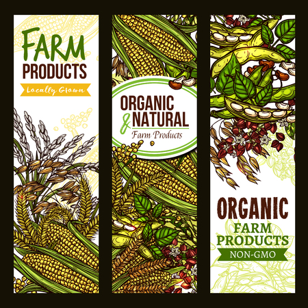 spelt: Cereals and grain products banner set for market. Vector design of organic wheat.