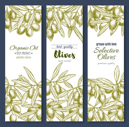オリーブの枝やオリーブ プロダクト ベクトル バナー  イラスト・ベクター素材