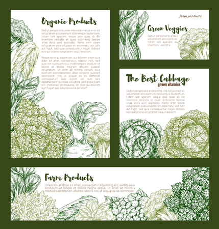 Cabbages vegetables vector templates set