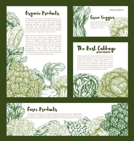 Cabbages vegetables vector templates set