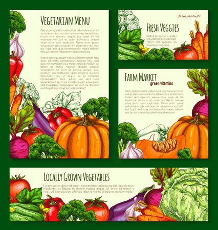 Vegetables havest vector banners and posters set