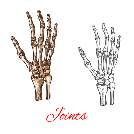 Vector sketch icon of human hand bones or joints