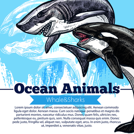 underwater fishes: A Killer whale or orca and shark fish vector poster