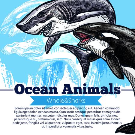 Un cartel del vector de la orca o la orca y el pez tiburón Ilustración de vector