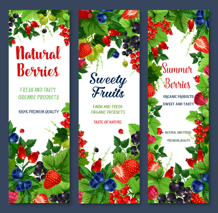 Berries and sweet fruits vector banners set Çizim