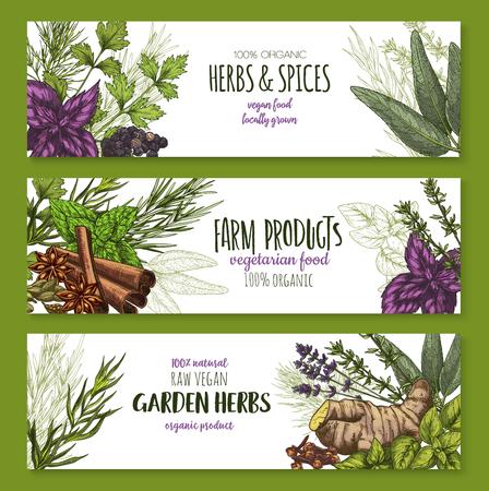 スパイスとハーブの農場の庭に成長し調味料バナー。ベクトル有機オレガノ、赤バジルやタイム、ローズマリー、自然セージやベイリーフとペパー