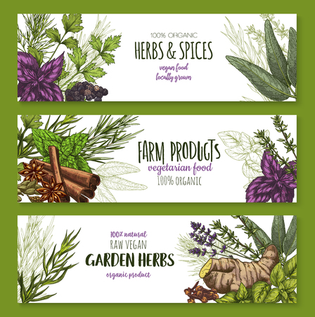 Spices and herbs farm grown and garden seasonings banners. Vector organic oregano, red basil or thyme and rosemary, natural sage or bay leaf and peppermint or spicy ginger for natural herbal market