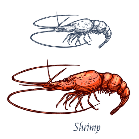Shrimp or prawn sketch vector icon. Saltwater crayfish crustaceans marine fauna species with claws. Isolated symbol for seafood restaurant sign or emblem, fishing club or fishery market Illustration